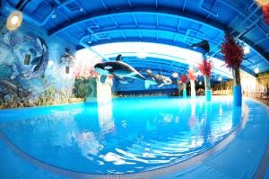Бизнес-план аквапарка