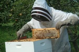 Бизнес разведение пчел