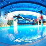 Бизнес-план открытия аквапарка